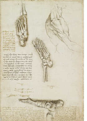 Featured image is reproduced from 'Leonardo da Vinci: Under the Skin.'