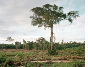 """""""Deforestation of Primary Forest, Central Kalimantan, Indonesia 03/2012"""" is reproduced from <I>Olaf Otto Becker: Reading the Landscape</I>."""