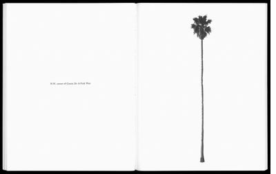 Palm trees and art in 'Paradise Is Now'