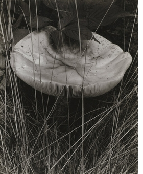 """""""Toadstool and Grasses, Georgetown, Maine"""" (1927) is reproduced from <I>Paul Strand</I>."""