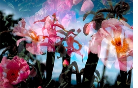 Featured image is reproduced from 'Peter Fischli and David Weiss: Flowers and Mushrooms.'