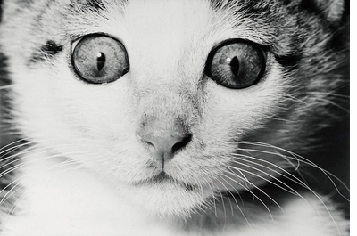 Photography and cat lovers, rejoice! Deluxe 'Masahisa Fukase: Sasuke' is out now!