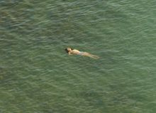 Richard Misrach: The Mysterious Opacity of Other Beings