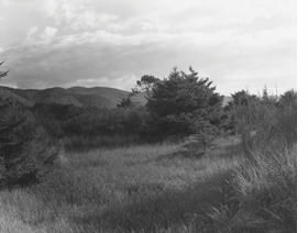 Featured image is reproduced from <I>Robert Adams: A Road Through Shore Pine</I>.