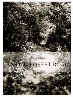 Robert Adams: An Old Forest Road