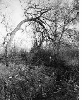 Featured image is reproduced from <I>Robert Adams: Around the House</I>.