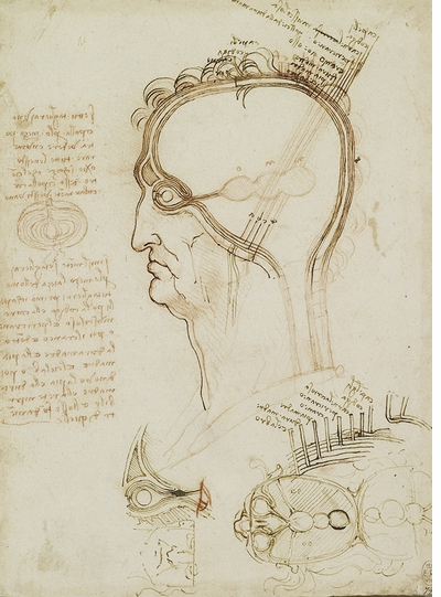 The anatomical drawings of Leonardo da Vinci, published upon the quincentennial of his death