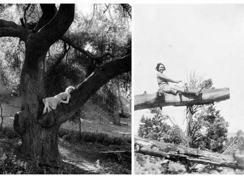 The deceptive simplicity of Women in Trees