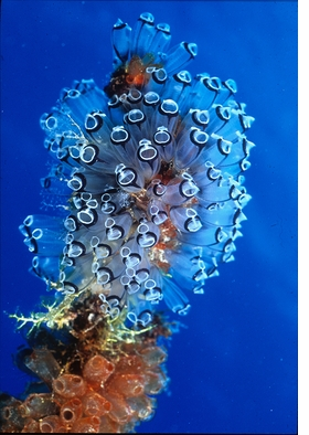 Featured image is reproduced from 'Underwater Photography'.