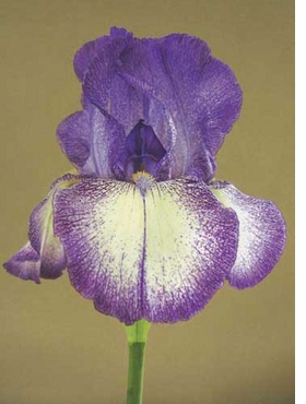 """Featured images, """"Bearded iris hybrid 346"""" (2004), is reproduced from <i>Vital Beauty</I>. The editors write, """"George Gessert has been breeding hybrids of bearded irises, Pacifica irises, Oriental poppies, California poppies, corn poppies and streptocarpuses for decades as a form of bio art. In this book, he has permitted us to use his photographs of some of his most beautiful cultivars."""""""