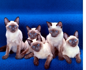 Featured image is reproduced from <i>Walter Chandoha: The Cat Photographer</i>.