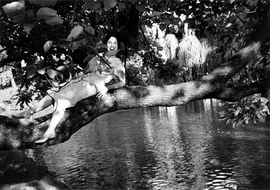 Featured image is reproduced from 'Women in Trees.'