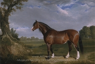 A Clydesdale Stallion painting reproduction, John Frederick Herring Sr.