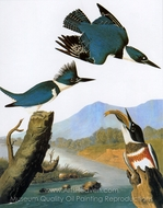 Belted Kingfisher painting reproduction, John James Audubon