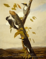 Black-Backed Three-Toed Woodpecker painting reproduction, John James Audubon