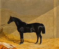 Black Horse in a Stable painting reproduction, John Frederick Herring Sr.