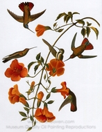 Black-Throated Mango painting reproduction, John James Audubon