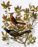 Boat-Tailed Grackle painting reproduction, John James Audubon
