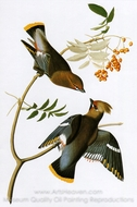 Bohemian Waxwing painting reproduction, John James Audubon