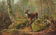 Buck in the Forest painting reproduction, Arthur Fitzwilliam Tait