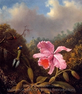Fighting Hummingbirds with Pink Orchid painting reproduction, Martin Johnson Heade