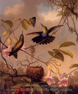 Fort-Tailed Woodnymph painting reproduction, Martin Johnson Heade