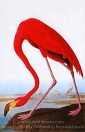 Greater Flamingo painting reproduction, John James Audubon