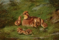 Hen Quail and Chickens painting reproduction, Arthur Fitzwilliam Tait