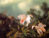 Jungle Orchids and Hummingbirds painting reproduction, Martin Johnson Heade