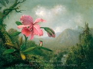 Orchid and Hummingbird Near a Mountain Waterfall painting reproduction, Martin Johnson Heade