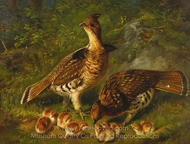 Pair Ruffed Grouse and Young painting reproduction, Arthur Fitzwilliam Tait