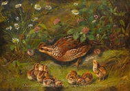 Quail painting reproduction, Arthur Fitzwilliam Tait