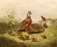 Quail and Young painting reproduction, Arthur Fitzwilliam Tait