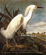 Snowy Egret painting reproduction, John James Audubon
