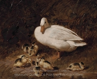 The Ducklings painting reproduction, John Frederick Herring Sr.