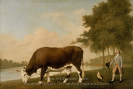 The Lincolnshire Ox painting reproduction, George Stubbs
