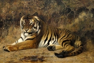 Tiger painting reproduction, Jean-Leon Gerome