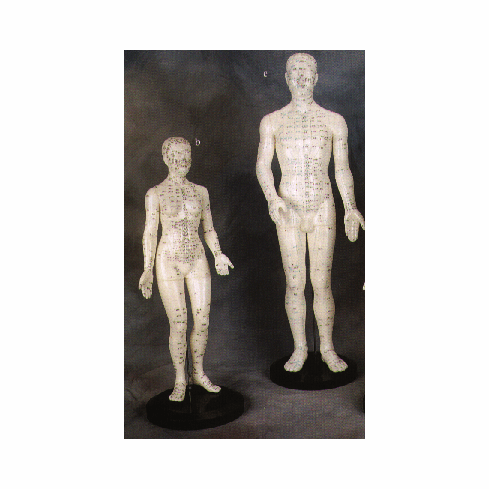 Human Acupuncture Models