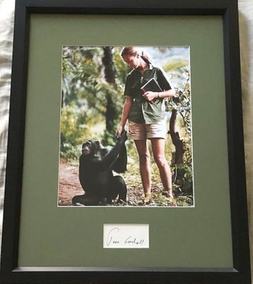 Jane Goodall autograph matted and framed with vintage 8x10 photo