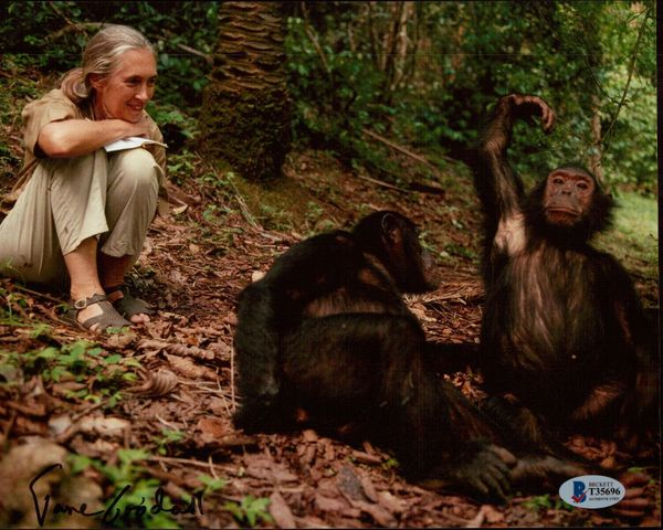 Jane Goodall autographed 8x10 photo (BAS authenticated)