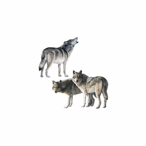 Wolves Wallies Wallpaper Cutouts