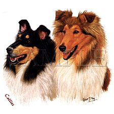 Collie T-shirts