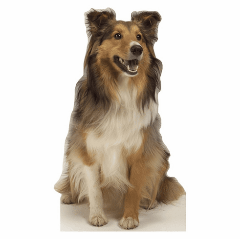 Collie Dog Standee