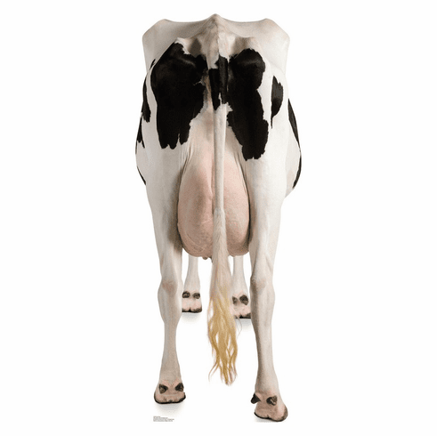 Cow's Rear Standee
