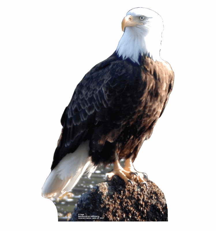 Eagle Standee