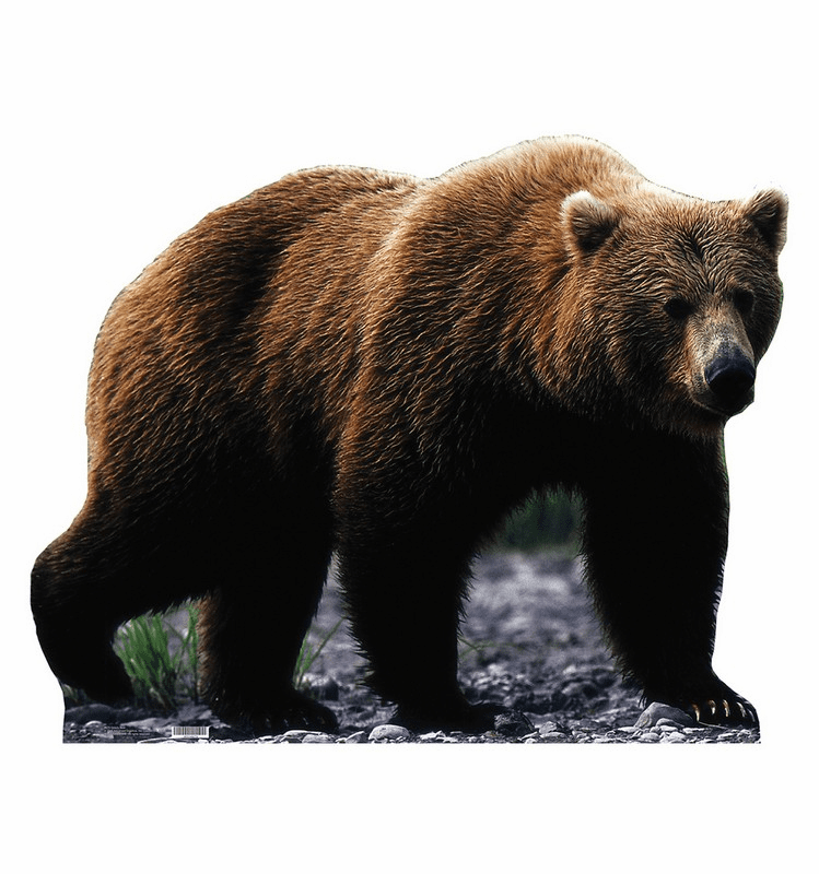 Grizzly Bear Standee