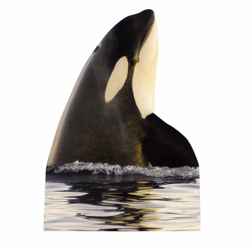 Killer Whale Standee