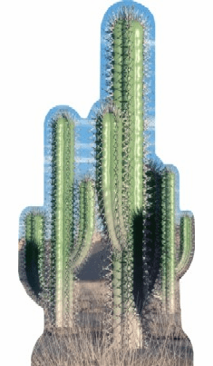 Life Size Cactus Standee - Group