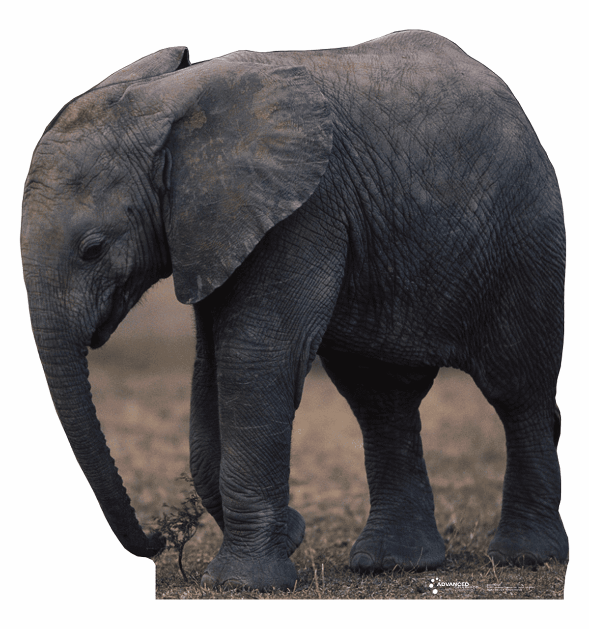 Life Size Elephant Standees