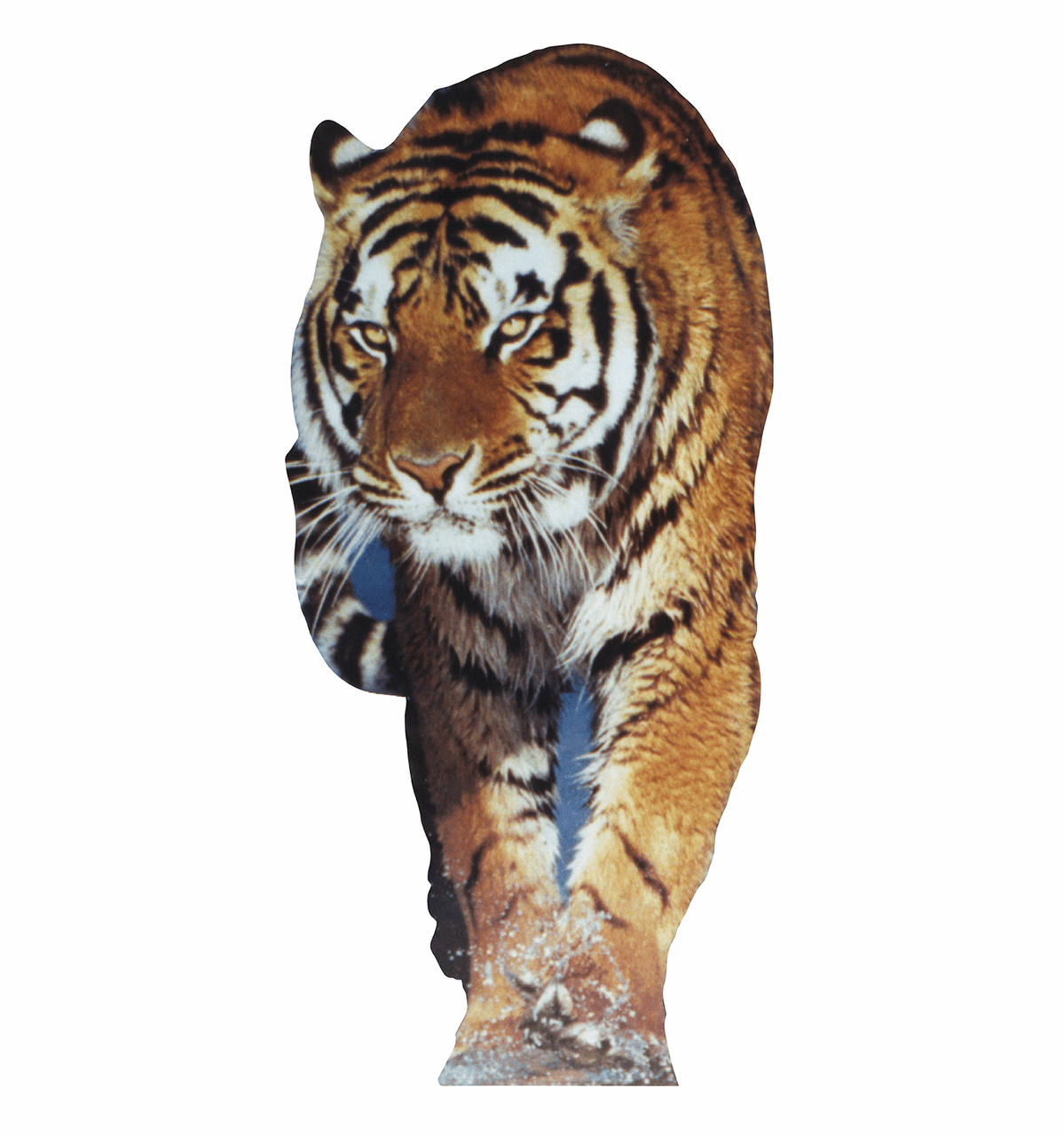 Life Size Tiger Standees